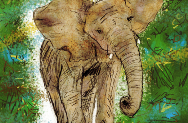 Iringa the Elephant - Illustration by Maddy Beaupré - mcbeaupre.com