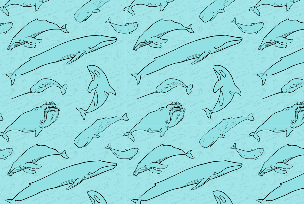 Whale Pattern Maddy Beaupré Illustration Extraordinary Whale Pattern